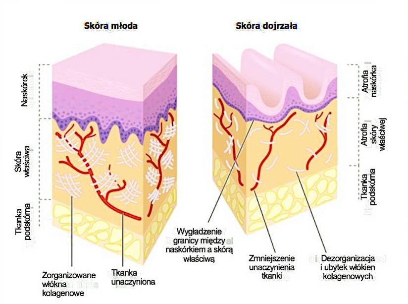sposób na odmłodzenie skóry
